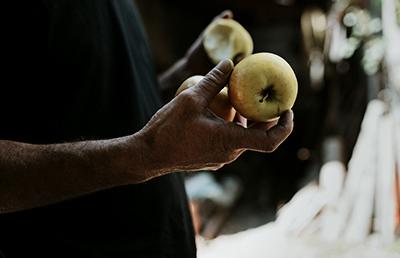 La Pomme des Alpes de Haute-Durance