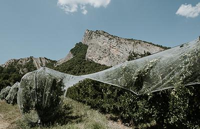 Arboriculteur des Alpes de Haute-Durance